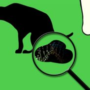 dog_poop_magnifying_glass_nose_DNA
