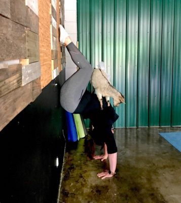 This One Time I Did Goat Yoga: How Being Vulnerable in Security isn't Always a Bad Thing